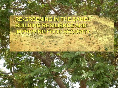 RE-GREENING IN THE SAHEL: BUILDING RESILIENCE AND IMPROVING FOOD SECURITY RE-GREENING IN THE SAHEL: BUILDING RESILIENCE AND IMPROVING FOOD SECURITY.
