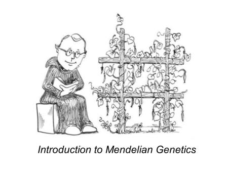 Introduction to Mendelian Genetics. Some History For thousands of years farmers and herders have been selectively breeding their plants and animals to.