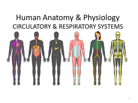 Human Anatomy & Physiology CIRCULATORY & RESPIRATORY SYSTEMS 1.