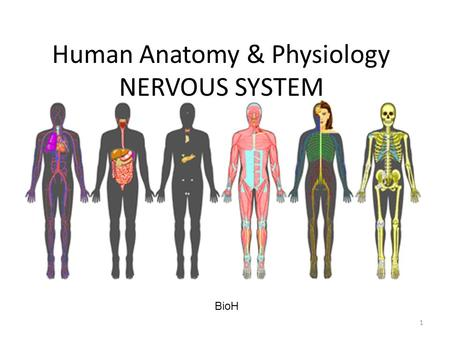 Human Anatomy & Physiology NERVOUS SYSTEM BioH 1.