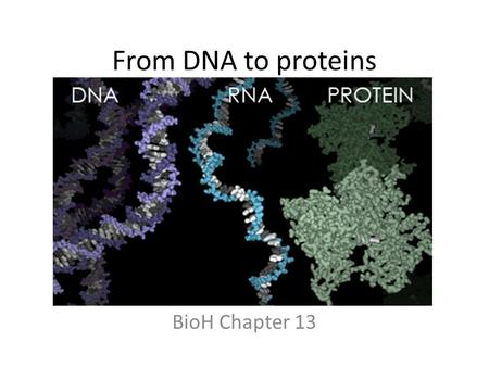 From DNA to proteins BioH Chapter 13. The BIG picture – Gametes to genes.
