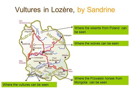 Vultures in Lozère, by Sandrine Where the vultures can be seen Where the wisents from Poland can be seen Where the wolves can be seen Where the Przwalski.