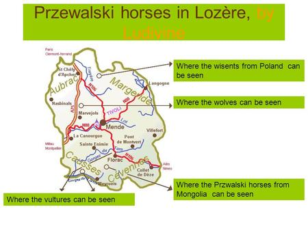 Przewalski horses in Lozère, by Ludivine Where the vultures can be seen Where the wisents from Poland can be seen Where the wolves can be seen Where the.