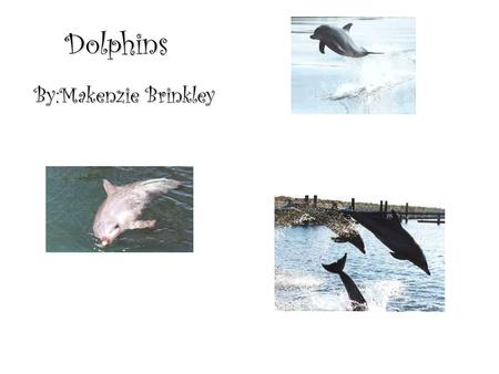 Dolphins By:Makenzie Brinkley. 1 Have you ever heard of a mammal called a dolphin? Well, if you havent, Im here to tell you a little about them. Dolphins.