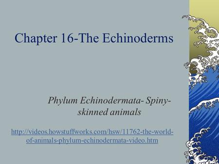 Chapter 16-The Echinoderms Phylum Echinodermata- Spiny- skinned animals  of-animals-phylum-echinodermata-video.htm.