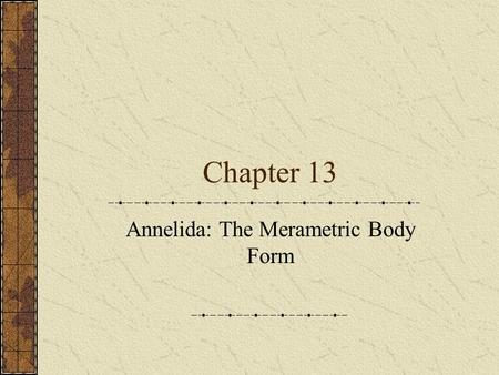 Chapter 13 Annelida: The Merametric Body Form. Phylum Annelida Segmented worms believed to have evolved in the sea where two-thirds still live Other one.