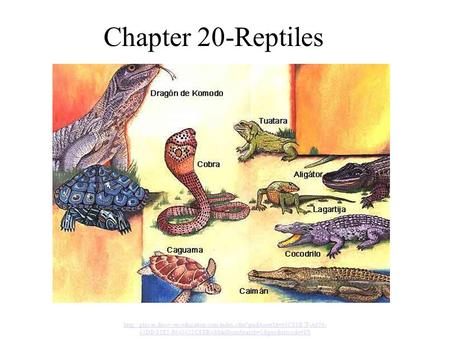 Chapter 20-Reptiles http://player.discoveryeducation.com/index.cfm?guidAssetId=63C88B7F-A656-43DD-83E5-F640422CEFB4&blnFromSearch=1&productcode=US.