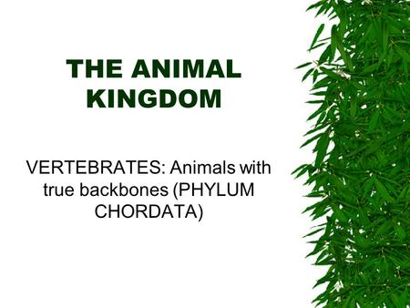 THE ANIMAL KINGDOM VERTEBRATES: Animals with true backbones (PHYLUM CHORDATA)