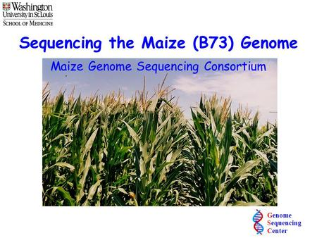 Sequencing the Maize (B73) Genome
