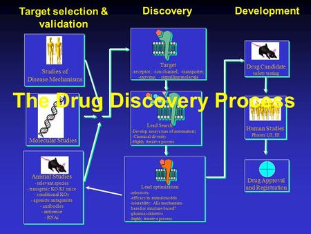 Drug Candidate safety testing Animal Studies - relevant species - transgenic KO/KI mice - conditional KOs - agonists/antagonists - antibodies - antisense.