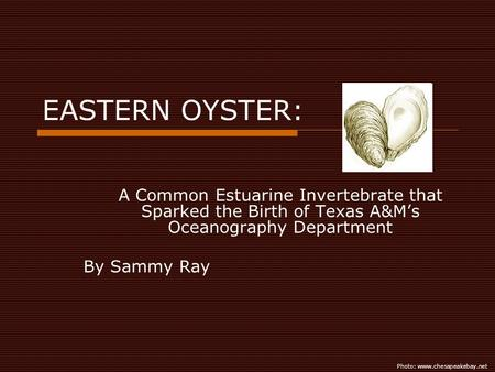 EASTERN OYSTER: A Common Estuarine Invertebrate that Sparked the Birth of Texas A&Ms Oceanography Department By Sammy Ray Photo: www.chesapeakebay.net.