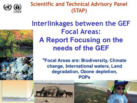 Interlinkages between the GEF Focal Areas: A Report Focusing on the needs of the GEF Scientific and Technical Advisory Panel (STAP) * Focal Areas are:
