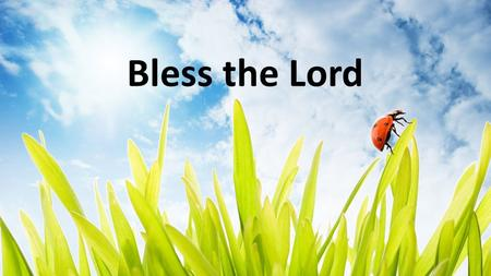 Bless the Lord. All who gather in the holy place, bless the Lord! All who call upon the God who saves, bless the Lord! If your sins have been washed a-way,