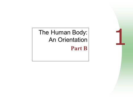 1 The Human Body: An Orientation Part B. Anatomical Position Body erect, feet slightly apart, palms facing forward, thumbs point away from body Figure.