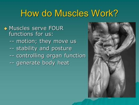 How do Muscles Work? Muscles serve FOUR functions for us: Muscles serve FOUR functions for us: -- motion; they move us -- motion; they move us -- stability.