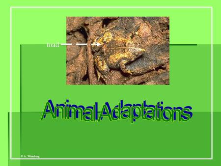 Toad Animal Adaptations.