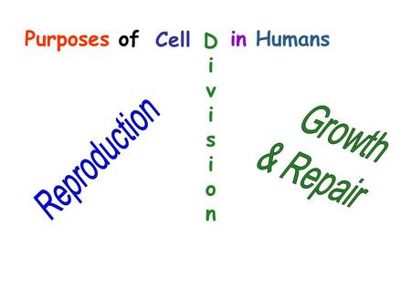 Purposes of in Humans Cell DivisionDivision. Purpose: Cell division for reproduction creates offspring with traits from both mother and father. Called: