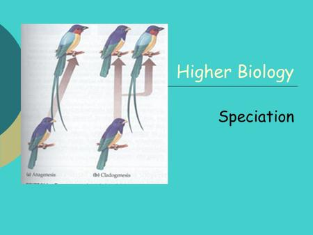 Higher Biology Speciation.