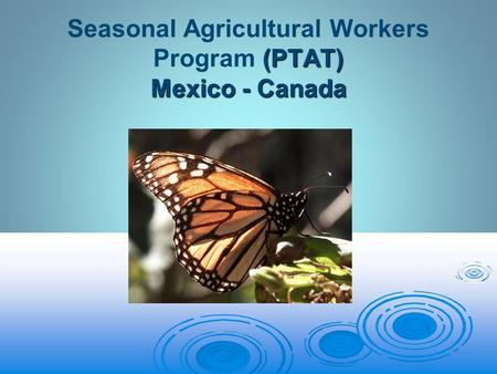 (PTAT) Mexico - Canada Seasonal Agricultural Workers Program (PTAT) Mexico - Canada.