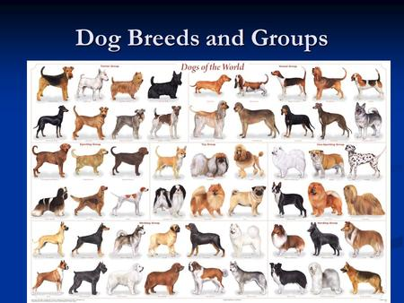 Dog Breeds and Groups.