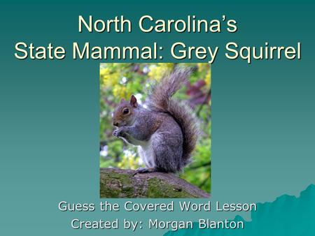 North Carolinas State Mammal: Grey Squirrel Guess the Covered Word Lesson Created by: Morgan Blanton.
