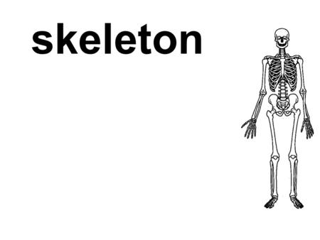 Skeleton. support the hard structure (bones and cartilages) that provides a frame for the body of an animal.
