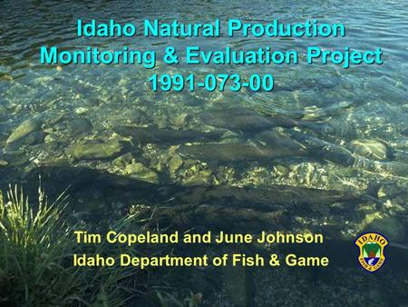 Tim Copeland and June Johnson Idaho Department of Fish & Game Idaho Natural Production Monitoring & Evaluation Project 1991-073-00.