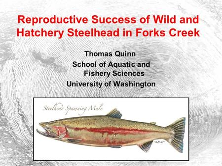 Reproductive Success of Wild and Hatchery Steelhead in Forks Creek Thomas Quinn School of Aquatic and Fishery Sciences University of Washington.