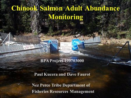 Chinook Salmon Adult Abundance Monitoring Paul Kucera and Dave Faurot Nez Perce Tribe Department of Fisheries Resources Management BPA Project 199703000.