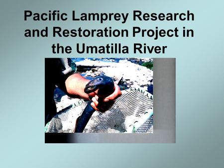 Pacific Lamprey Research and Restoration Project in the Umatilla River.