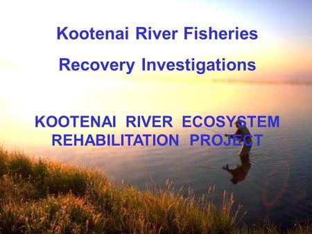 Kootenai River Fisheries Recovery Investigations KOOTENAI RIVER ECOSYSTEM REHABILITATION PROJECT.