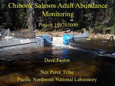 Chinook Salmon Adult Abundance Monitoring Project 199703000 Dave Faurot Nez Perce Tribe Pacific Northwest National Laboratory.
