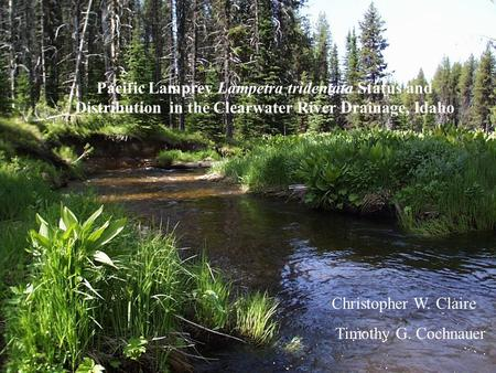 Pacific Lamprey Lampetra tridentata Status and Distribution in the Clearwater River Drainage, Idaho Christopher W. Claire Timothy G. Cochnauer.
