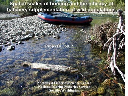 Spatial scales of homing and the efficacy of hatchery supplementation of wild populations Northwest Fisheries Science Center National Marine Fisheries.