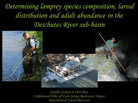 Determining lamprey species composition, larval distribution and adult abundance in the Deschutes River sub-basin Jennifer Graham & Chris Brun Confederated.