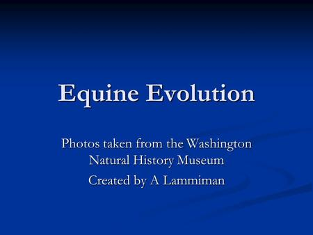 Equine Evolution Photos taken from the Washington Natural History Museum Created by A Lammiman.