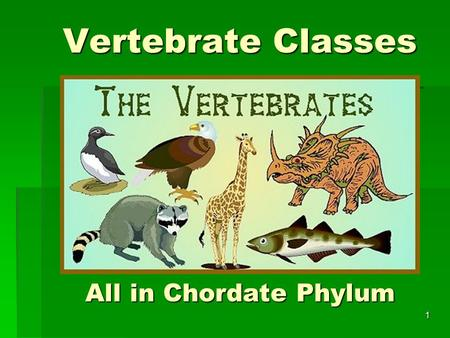 Vertebrate Classes All in Chordate Phylum 1. All vertebrates have… Bilateral symmetry Bilateral symmetry Fully developed coelom with organs Fully developed.