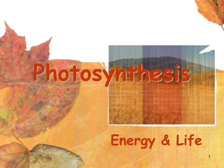 1 Photosynthesis Energy & Life. 2 Overview of Photosynthesis.