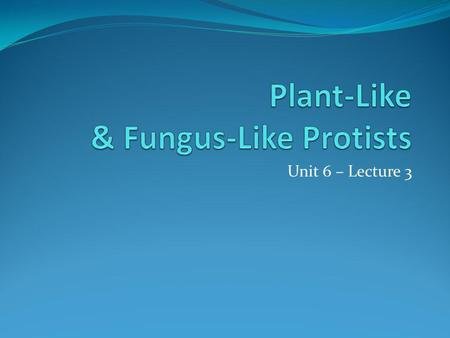 Unit 6 – Lecture 3. Algae – an Introduction Alga – plant like protist – plural, algae unicellular or multicellular major producer of worlds oxygen sexual.
