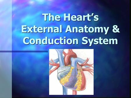 The Hearts External Anatomy & Conduction System. Heart at rest Heart at rest Blood flows from large veins into atria Blood flows from large veins into.