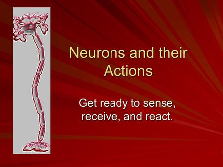 Neurons and their Actions Get ready to sense, receive, and react.