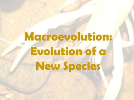 Macroevolution: Evolution of a New Species. Levels of Evolutionary Study Microevolution: examines changes to the genes (alleles) within populations –Population.