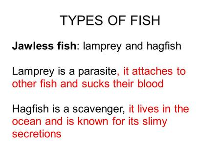 TYPES OF FISH Jawless fish: lamprey and hagfish Lamprey is a parasite, it attaches to other fish and sucks their blood Hagfish is a scavenger, it lives.