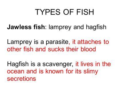 Phylum chordata n three common characteristics n i for Characteristics of fish