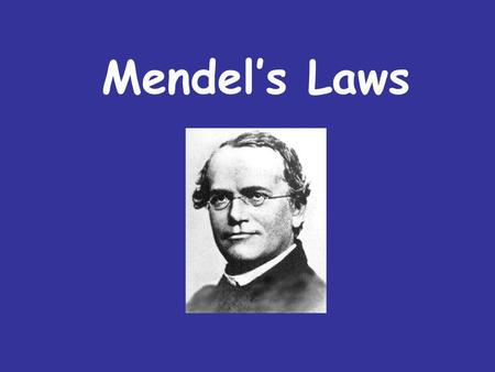 Mendels Laws. What we already know… Inheritable factors or genes are responsible for all heritable characteristics Phenotype is based on Genotype Each.