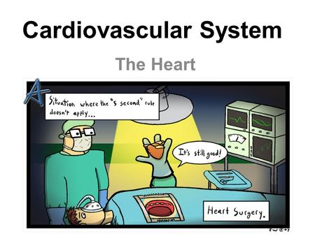 Cardiovascular System The Heart. The Cardiovascular System A closed system of the heart and blood vessels –The heart pumps blood –Blood vessels allow.