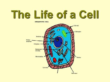 The Life of a Cell. Chemistry Element - A substance that can not be broken down into simpler substance. Trace elements are found in living things in very.