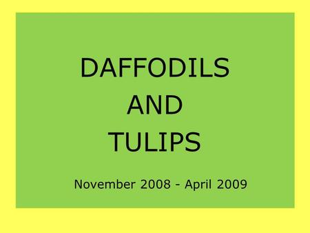 DAFFODILS AND TULIPS November 2008 - April 2009. Our 4 and 5 years old have planted bulbs in the school.