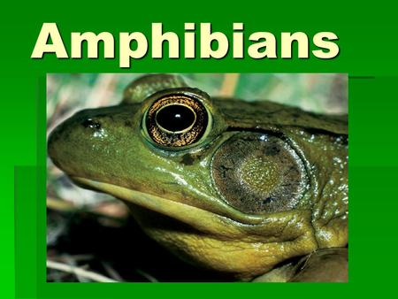 Amphibians. Characteristics of Amphibians Vertebrate Vertebrate Lives in water as larva; land as adult (some exceptions) Lives in water as larva; land.