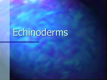 Echinoderms.